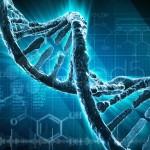 El dilema del genoma 'post mortem': ¿Qué hacer con los análisis genéticos cuando mueres?
