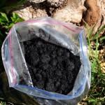 Desarrollan un biofertilizante que nutre el suelo y captura carbono