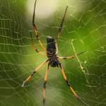 ¿Cómo evoluciona la microestructura de la seda de araña?