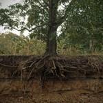 El mecanismo que permite el crecimiento continuo en las plantas
