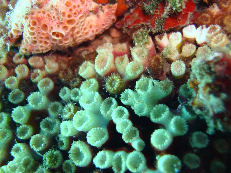 Arrecifes en el Mediterráneo- UAB, MEDSEA