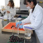 Eliminan hongos que atacan fruta y hortalizas con aceite de orégano y eucalipto