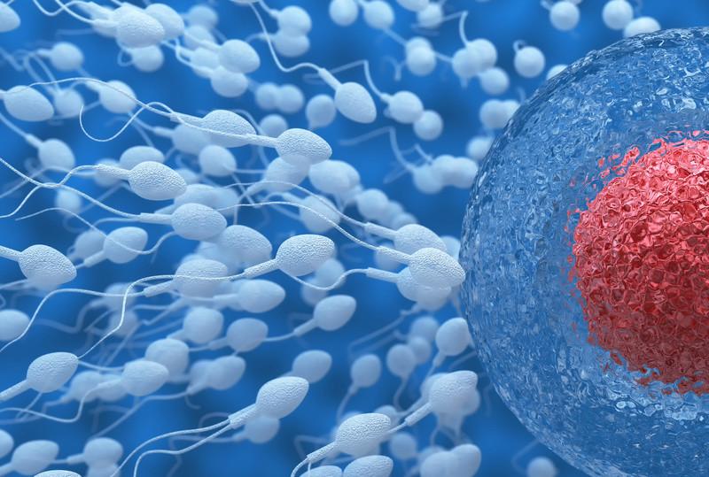 Una proteína del esperma, clave para el éxito del anticonceptivo masculino
