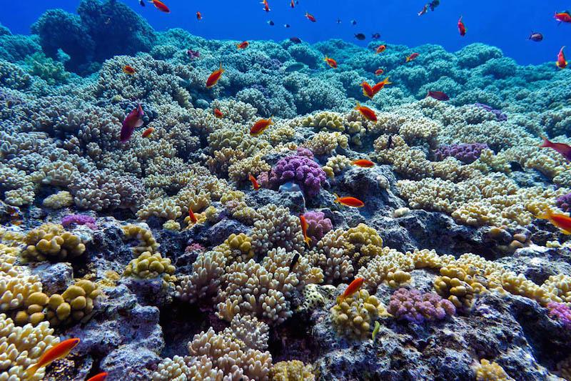 Arrecifes coralinos del Parque Nacional Cabo Pulmo, en Baja California Sur