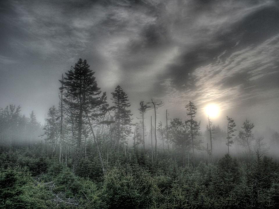 Amanecer en el bosque de niebla