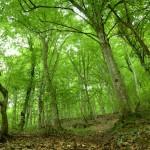 La necesidad de revisar las actuales políticas de reforestación