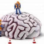 Un compuesto ayuda a regenerar neuronas en zonas dañadas del cerebro
