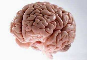 Neurociencia para vivir en paz