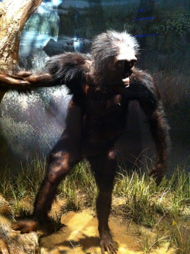 Lucy, Australophitecus afarensis, Museo de la Evolución Humana