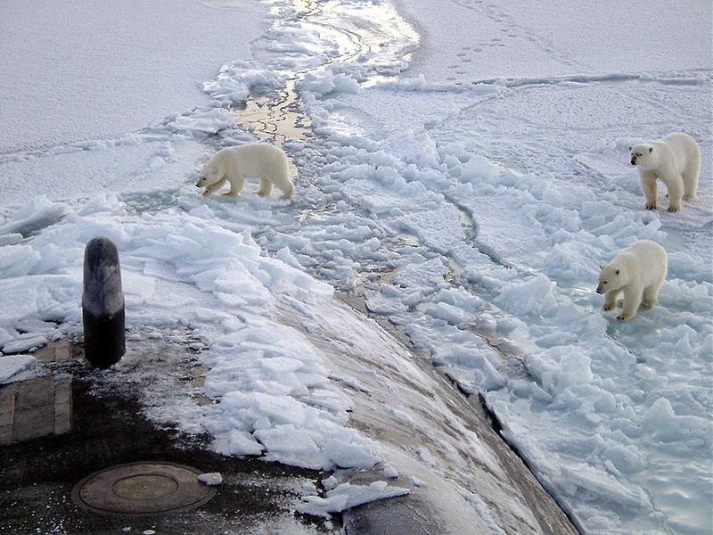 Tres osos polares se acercan a la proa del submarino USS Honolulu en el Polo Norte- Wikipedia