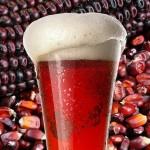 Biotecnólogos sustituyen la cebada por maíz para la elaboración de cerveza