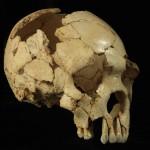 La cara humana: estudio sobre su evolución