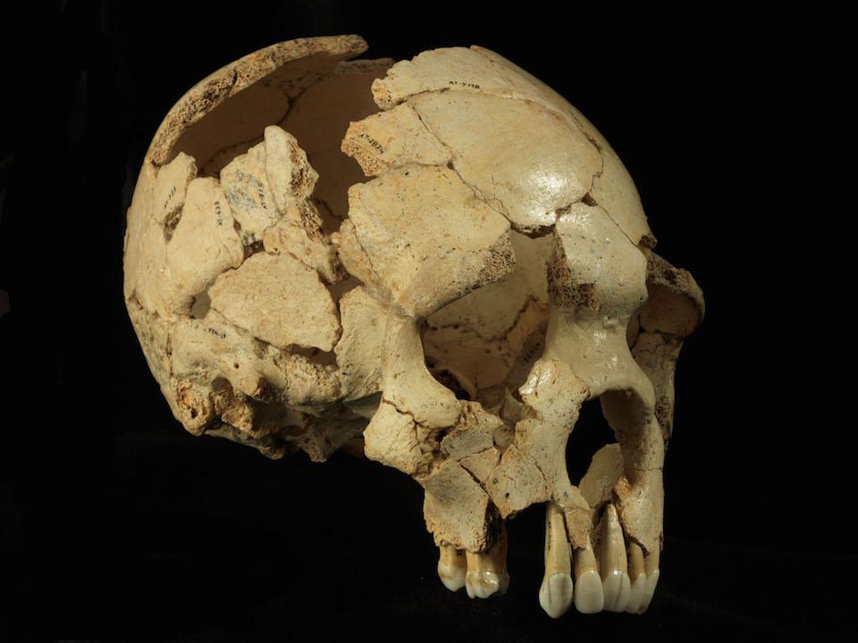 Cráneo 6 de la Sima de los Huesos (Atapuerca, Burgos)- Javier Trueba:MSF