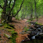 Los árboles compiten para sobrevivir en el bosque