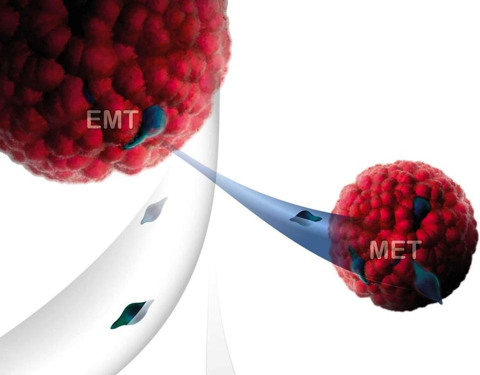El núcleo celular, clave para comprender y contener el cáncer