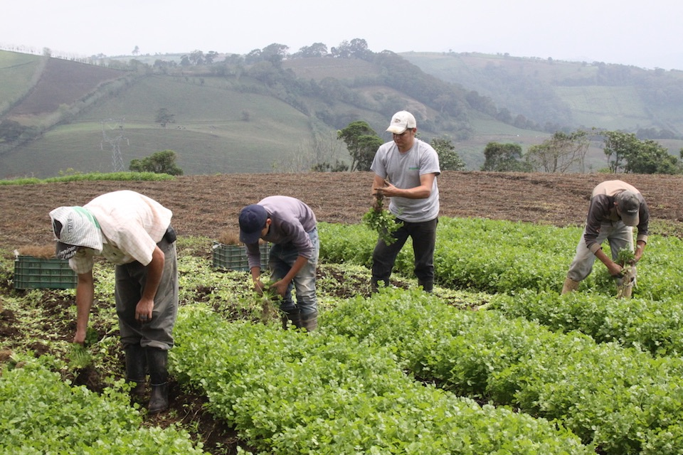Agricultura, cosecha- FAO