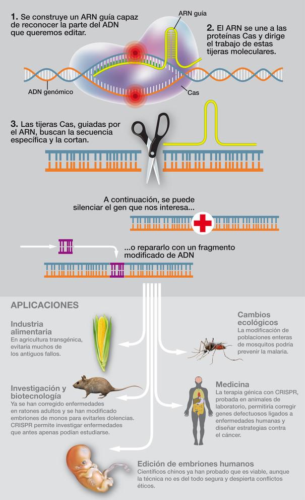 CRISPR, edición de ADN