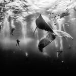 """Anuar Patjane, """"Ballenas que susurran"""", 2º lugar en el WPP 2016. Una muestra de su trabajo"""
