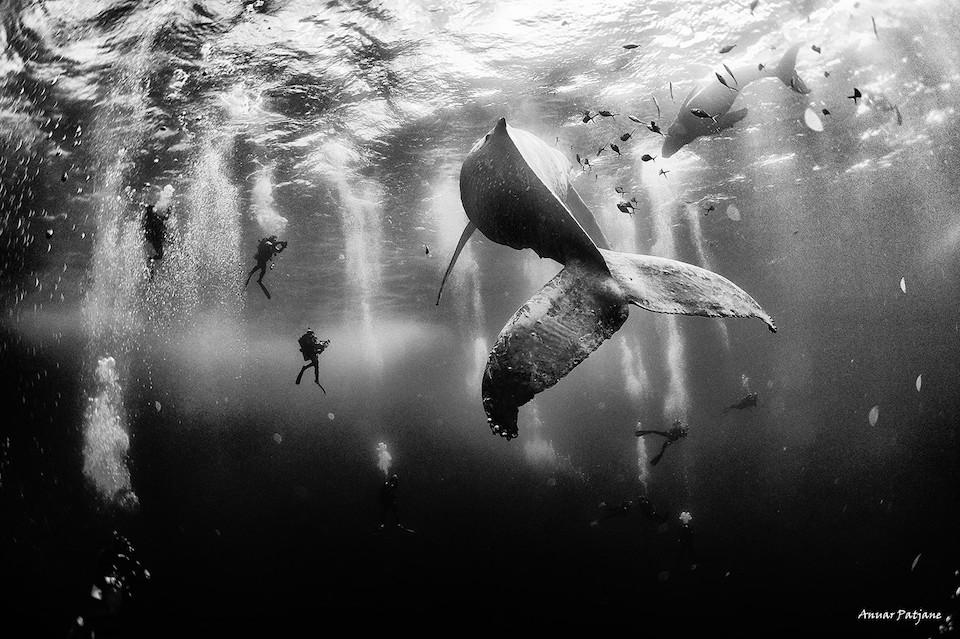Ballenas que susurran- Anuar Patjane