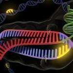 Reino Unido, el primero en autorizar la edición genética de embriones