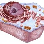 Cuando las células empezaron a ser complejas: el origen de los eucariotas
