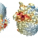 Un microscopio 3D desvela detalles de las células cancerosas (VIDEO)