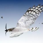 Los espantapajaros del futuro: drones con forma de ave rapaz