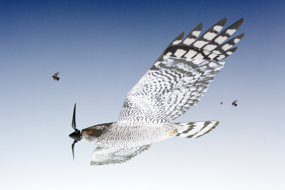 Dron mimético aviar- Fobos
