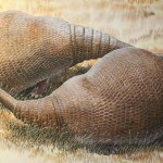 Los gliptodontes eran parientes de los armadillos gigantes