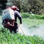 Los insecticidas organofosforados también predisponen al cáncer