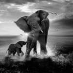 Salvar a los elefantes: Día Mundial de la Vida Silvestre 2016