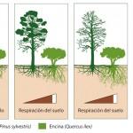 El suelo pierde capacidad de autorreparación al sustituir pinos por encinos