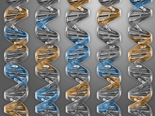 Genoma bacteriano mínimo, con solo los genes necesarios para la vida- C Bickel   Science (2016)