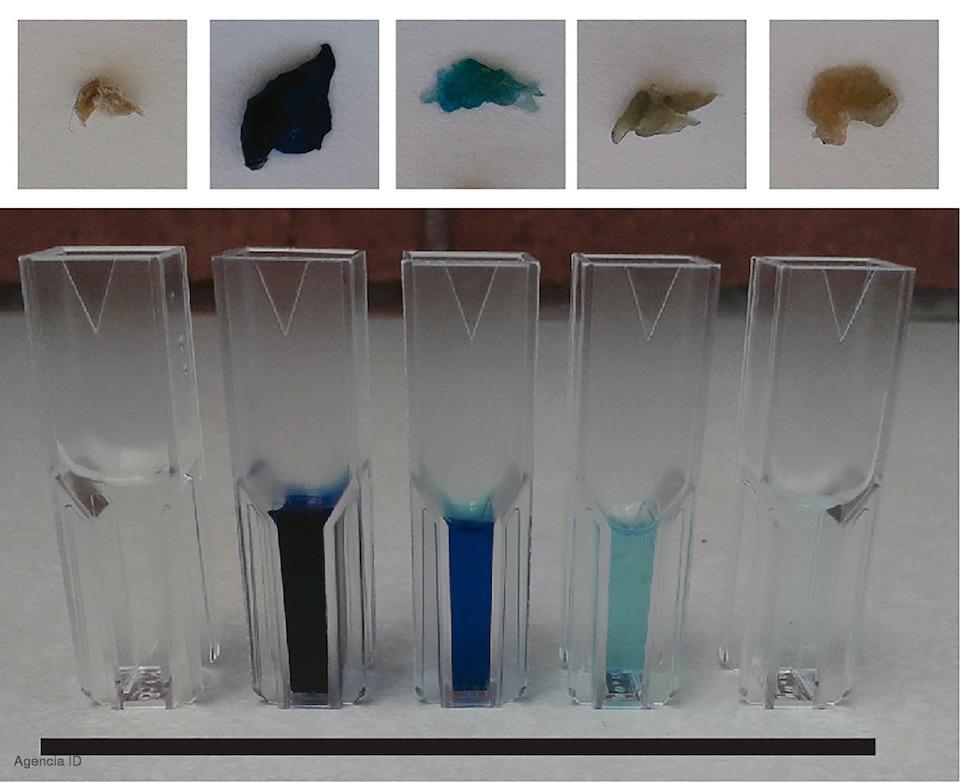 Hongo Rhodotorula mucilaginosa, para obtener plástico anticontaminante