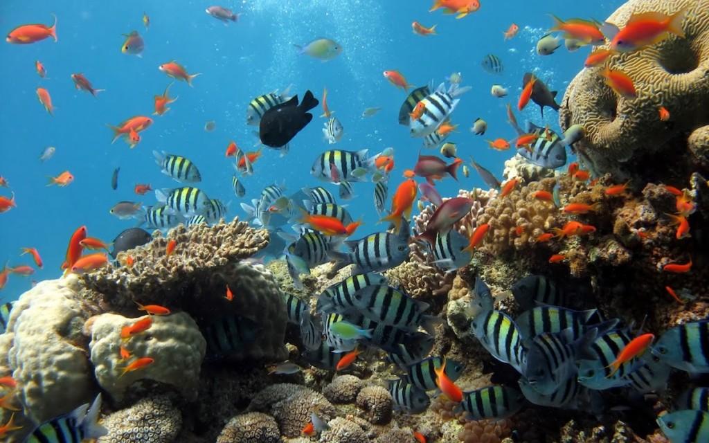 La salud de la Gran Barrera de Coral se deteriora por el cambio climático