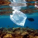 Bacterias devoradoras de plástico