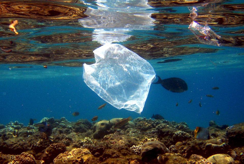 Plástico y peces en el arrécife de coral del complejo turístico 'Naama Bay', en el Mar Rojo, Egipto- Mike Nelson, EFE