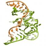 Primera estructura en 3D de la cara enzimática del ADN