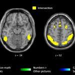Detectan regiones del cerebro que se activan en los matemáticos