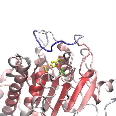 Estructura 3D de la proteína LIPG, contra el cáncer de mama- IRB Barcelona
