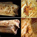 Los antepasados del hombre, eran alimento de carnívoros, hace 500,000 años