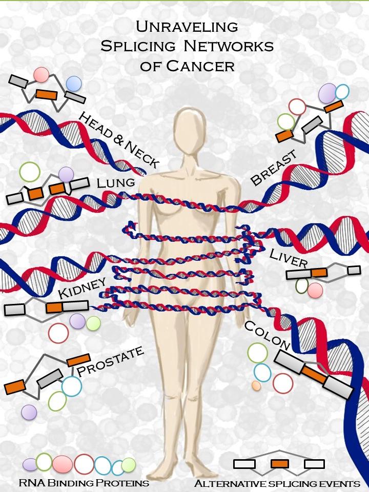 Mecanismo molecular del cáncer- Babita Singh-UPF