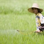 Estudian depresión psicológica en campesinos por uso de pesticidas