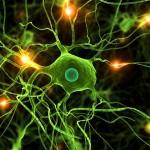 El gen LRRK2 bloquea la eliminación de residuos neuronales, acción asociada al Párkinson