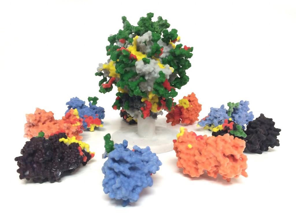 Vih glucosilado envuelto por proteinas- Guillaume Stewart-Jones y otros