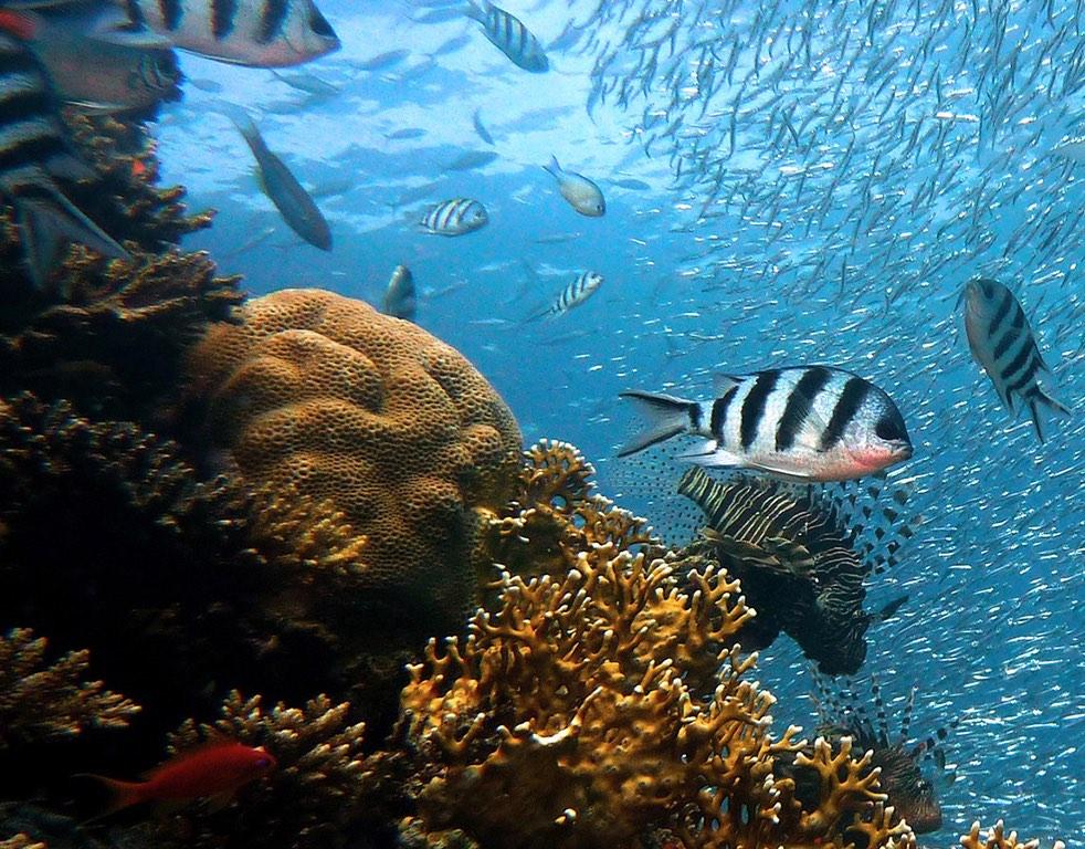 Sistema Arrecifal Veracruzano: ecosistema de conectividad entre el Caribe y el oeste del Golfo de México
