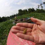 Los gobiernos del mundo no están preparado para proteger la biodiversidad: ONU