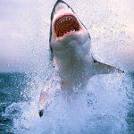 La ciencia desde el Macuiltépetl: El tiburón poeta