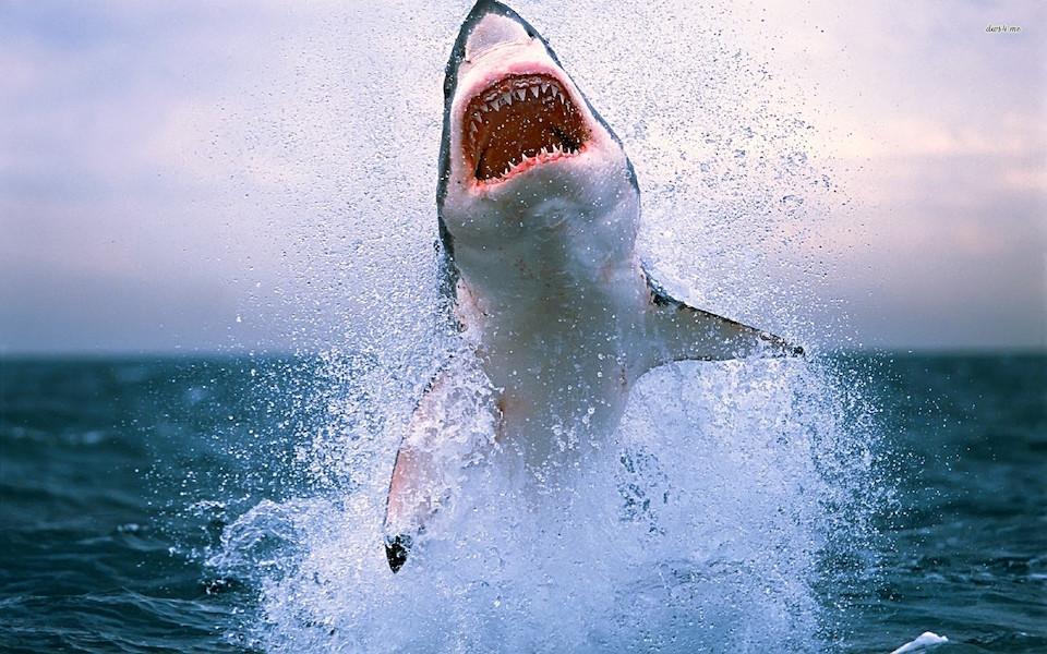 El salto del tiburón blanco