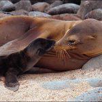 """Mayvi Alvarado ofrece """"Animales marinos que inspiraron a Verne"""""""